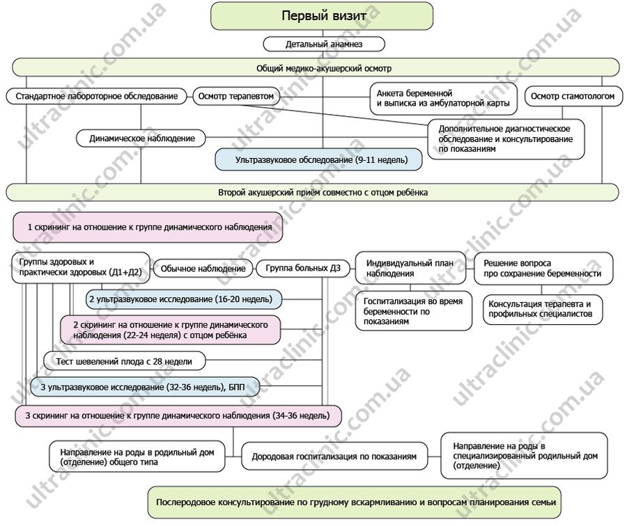 Схема ведения беременности