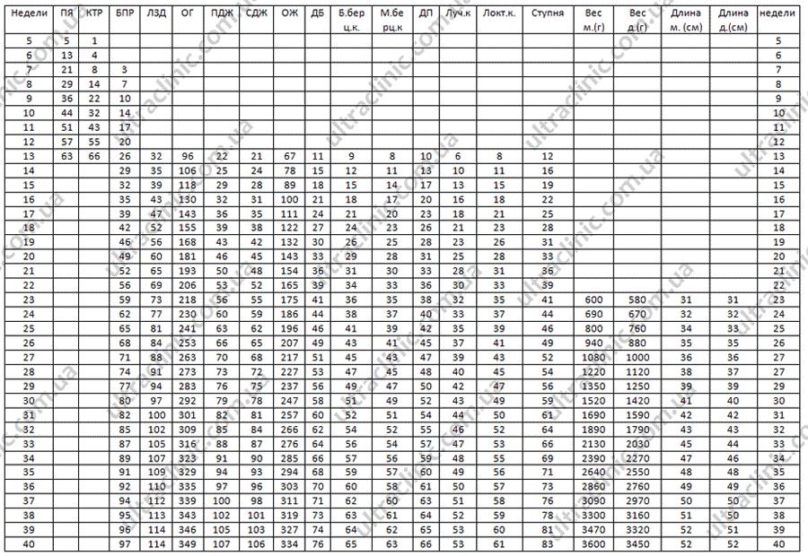 таблица размеров плода по неделям